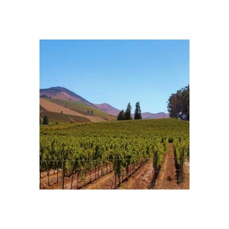 Bodega de vinos en mza