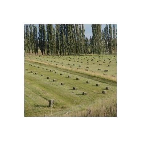 venta de fardos alfalfa
