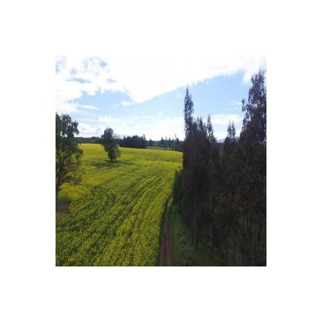 Fundo Agricola Forestal