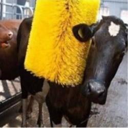 Cepillo masajeador de ganado...