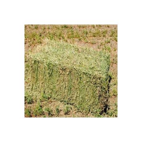 Alfalfa en fardos 35 kilos