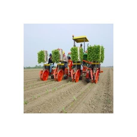Checchi Magli Trasplantadora de hortalizas