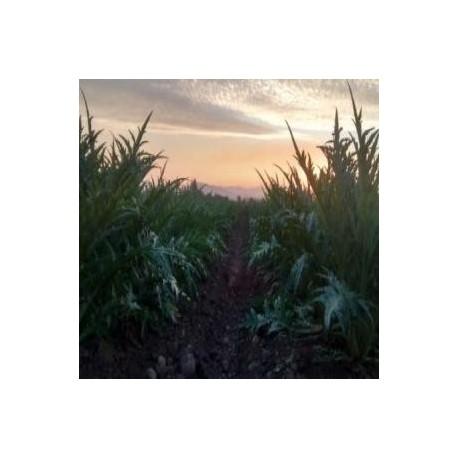 Parcela agrícola de 10 hectáreas