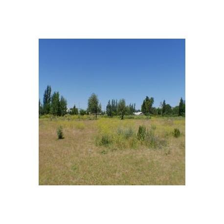 Permuto gran terreno urbano por propiedad agricola