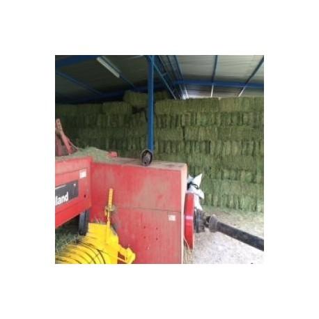 Alfalfa en fardos