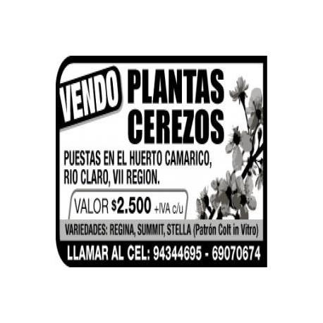 Ceresos in vitro