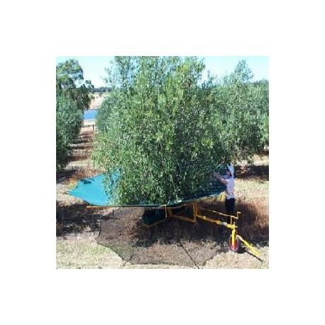 Cosechadora - Recibidora de olivas y frutas OLINET