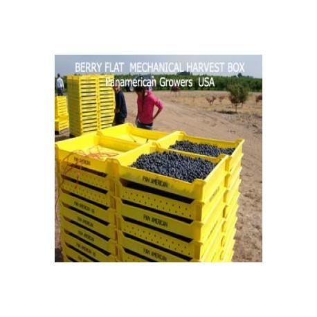 Cajas cosecheras para arándanos, frambuesas y moras THUNDERBIRD-BERRY FLAT