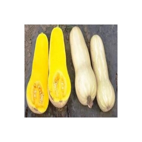 SEMILLAS ZAPALLO BUTTERNUT