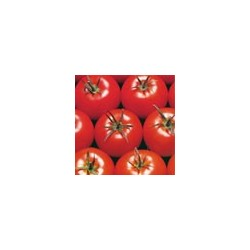 Semillas tomate syta...