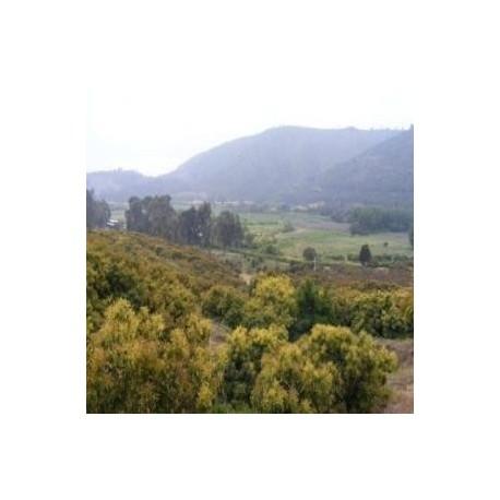 Predio Agrícola en Laguna Verde