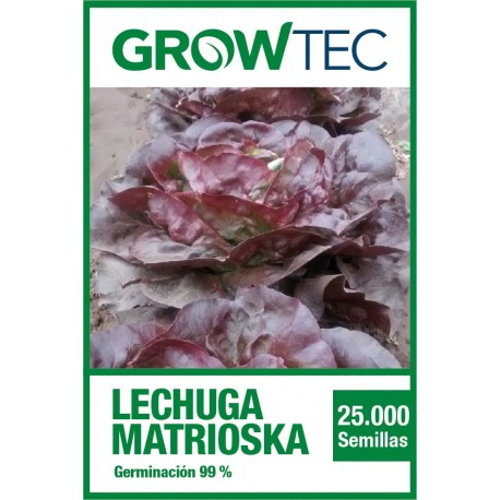 Lechuga Matrioska – 25 MX