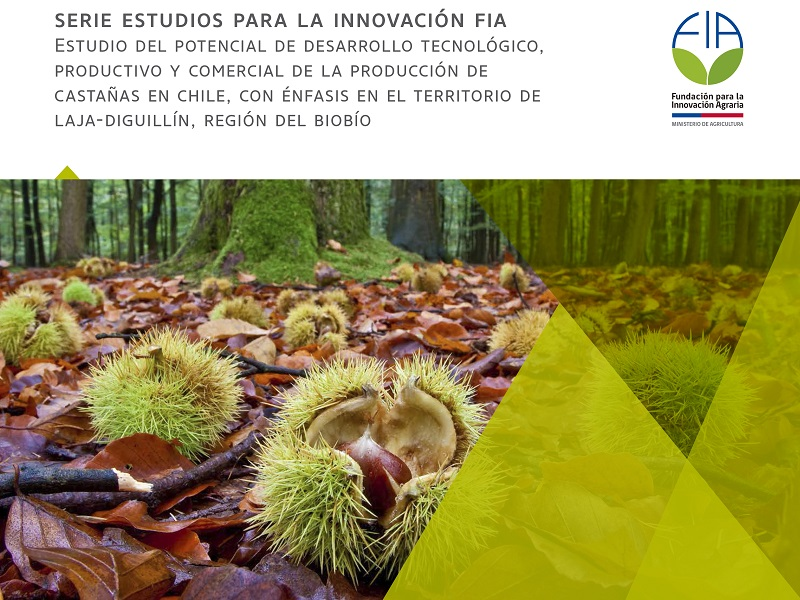 Estudio FIA sobre castañas ve potencial productivo en región del Biobío