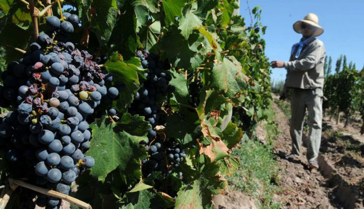 Jóvenes mexicanos son capacitados en Chile en materia vitivinícola