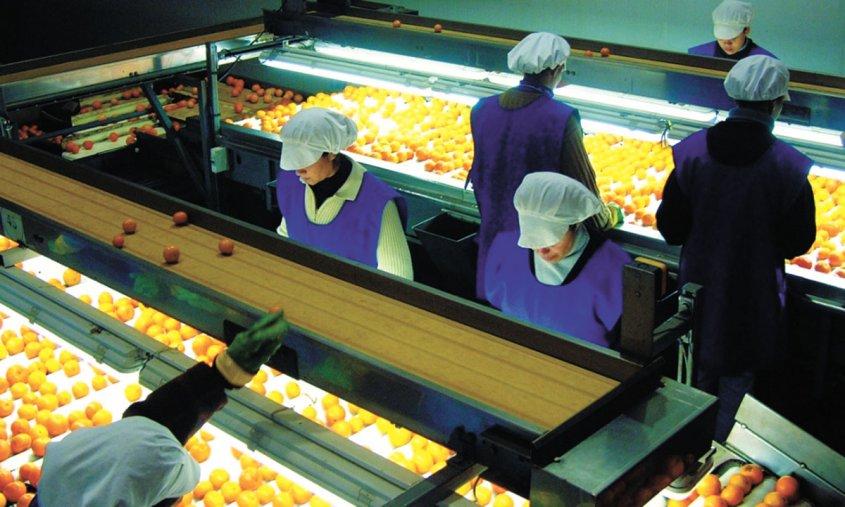 Uruguay: Exportaciones de frutas frescas crecieron 3% en 2017