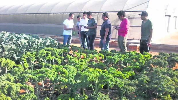 Cooperativismo moderno del sur de España: nueva mirada para los horticultores