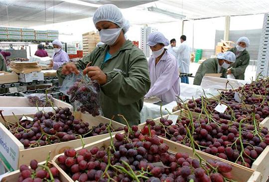 Estados Unidos: récord en envíos de uvas de California