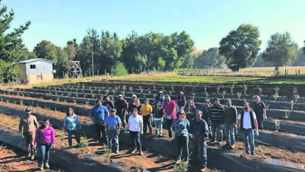 Mesa de la murtilla: aire fresco para un cultivo ancestral