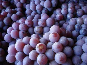 Vendimia 2019: Viñas son optimistas y no ven impacto por lluvias en producción