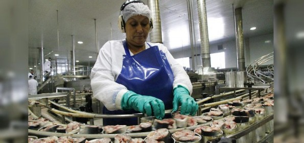 Región del Bío Bío exporta a Cuba $18 mil millones en pescados congelados