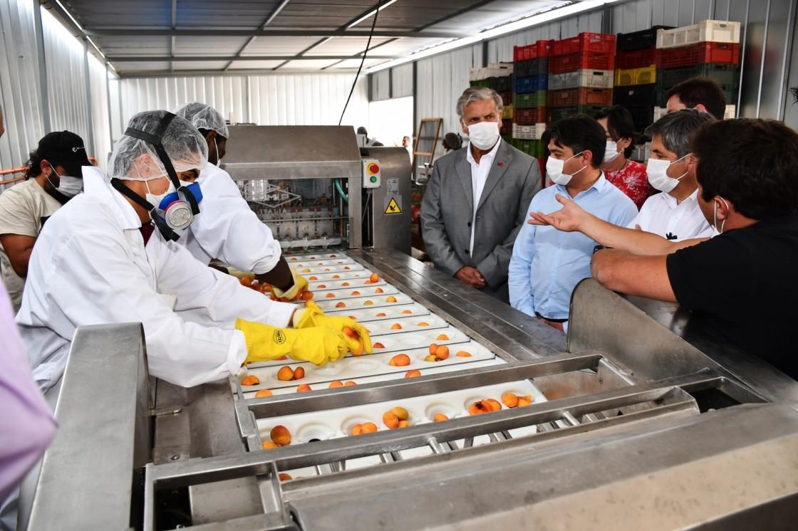 Gracias a la innovación productores del Choapa logran multiplicar el valor del damasco