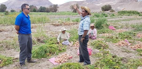 Cuantifican daño agrícola y pecuario tras lluvias estivales en la quebrada de Tarapacá