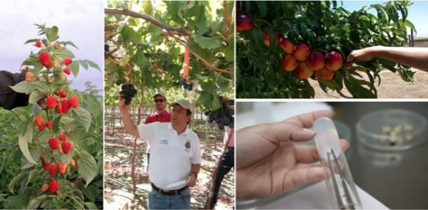 """Consorcio Tecnológico de la Fruta: """"Frutas Made in Chile"""""""