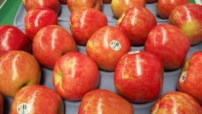 Salen primeras manzanas  Honeycrisp chilenas  con destino al retail de Estados Unidos