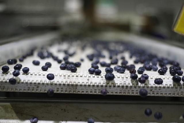 Temporada de Exportaciones de arándanos chilenos continúa y lo hace con cifras que superan los envíos de la campaña pasada